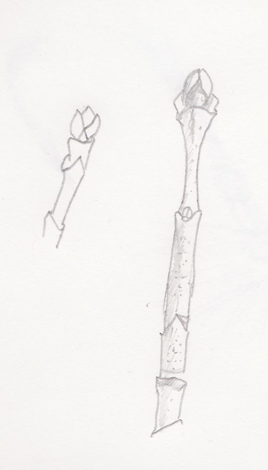 Sketch of maple tree buds