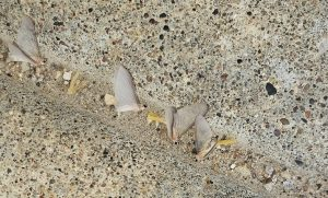 Mayflies on sidewalk by Dave Krier