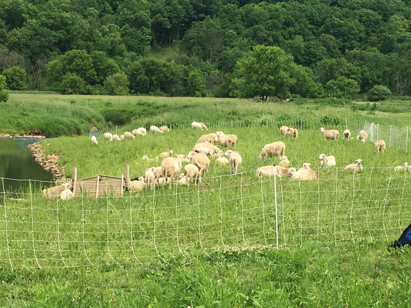 West Fork Watershed Council Invasives Goat Control