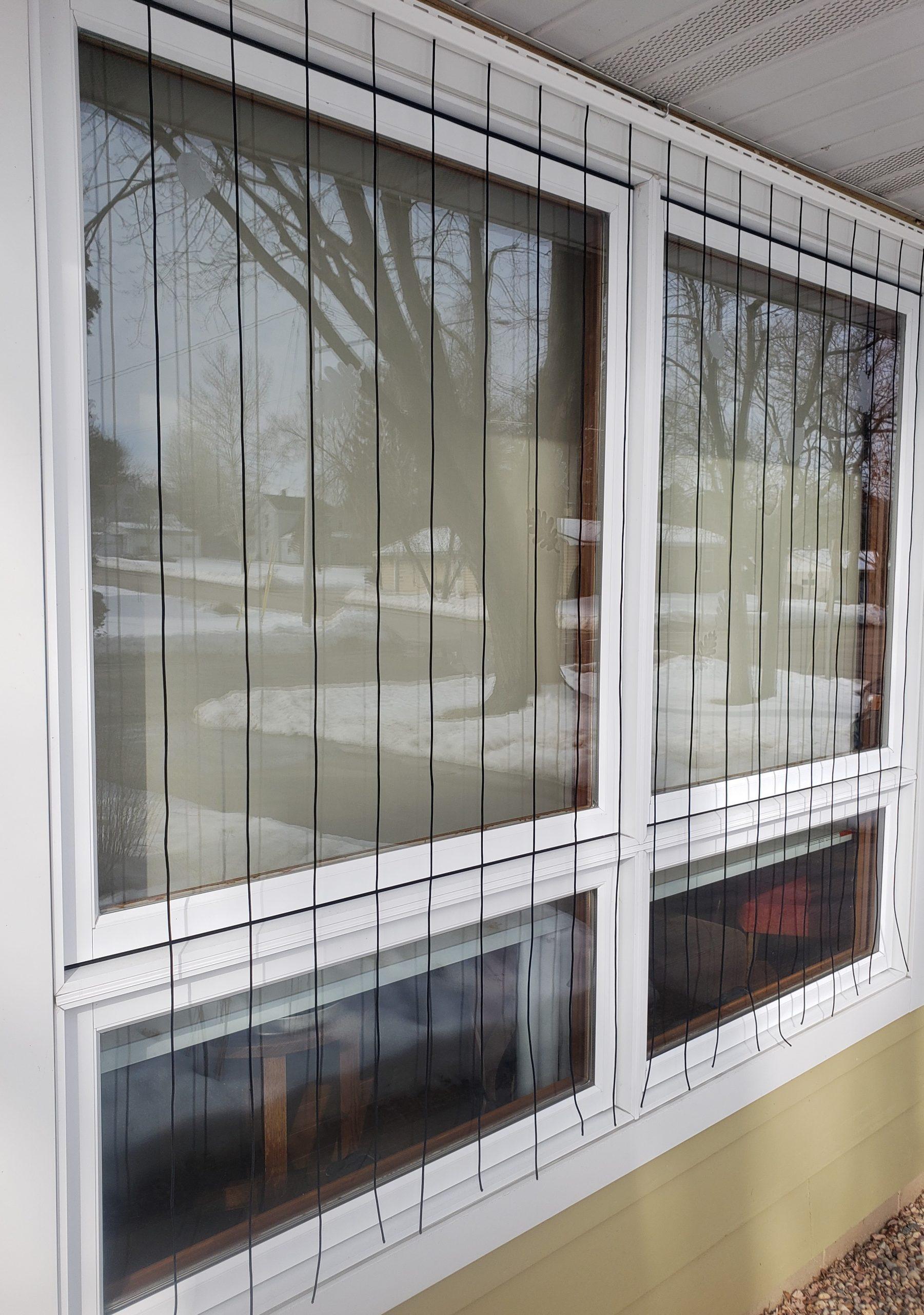Homemade window bird-strike protector