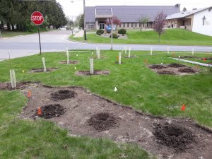 A yard with young trees and shrubs planted in a yard to be a privacy screen at an intersection.
