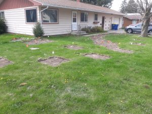 Lawn around house with bare patches