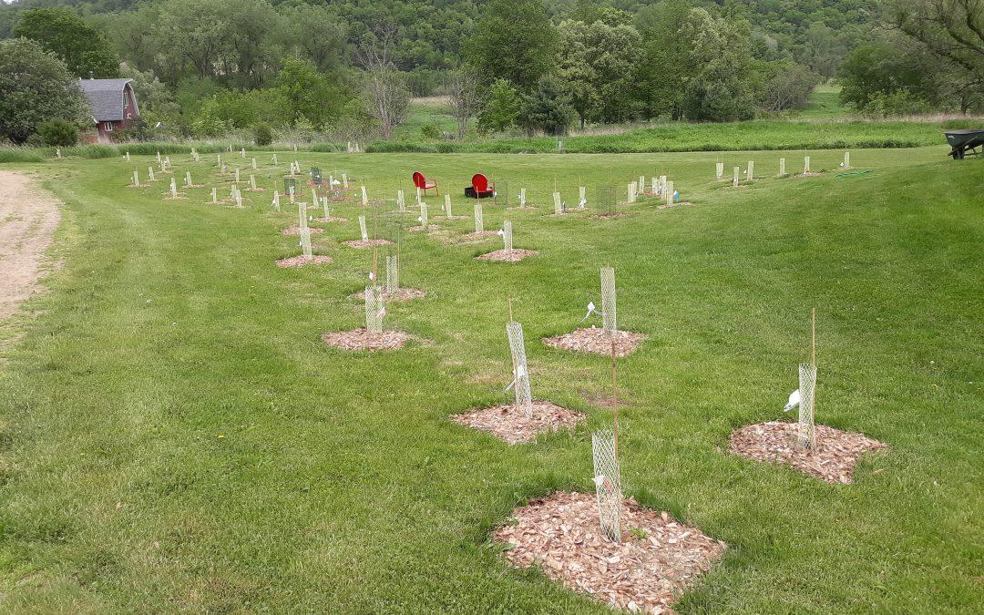 Tom's Story #9 – Finishing the Rural Planting