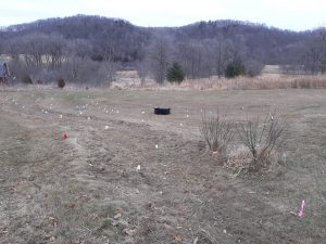 Before planting natives showing staked locations