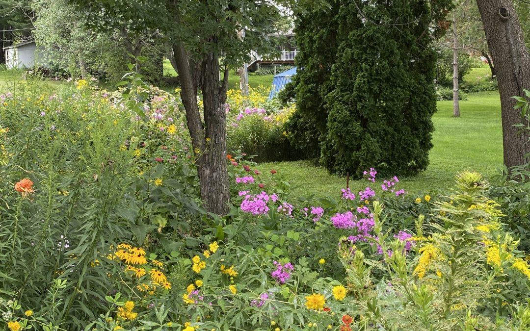 Native Plantings Garden Open House #1