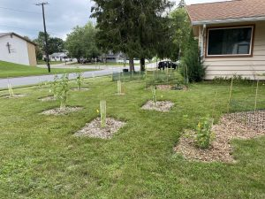 Side yard view of native plantings
