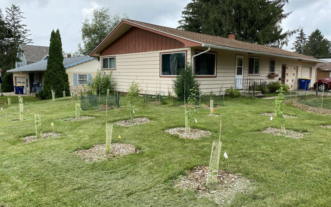 Native Plantings Garden Open House #4 (Tom's Story continued!)