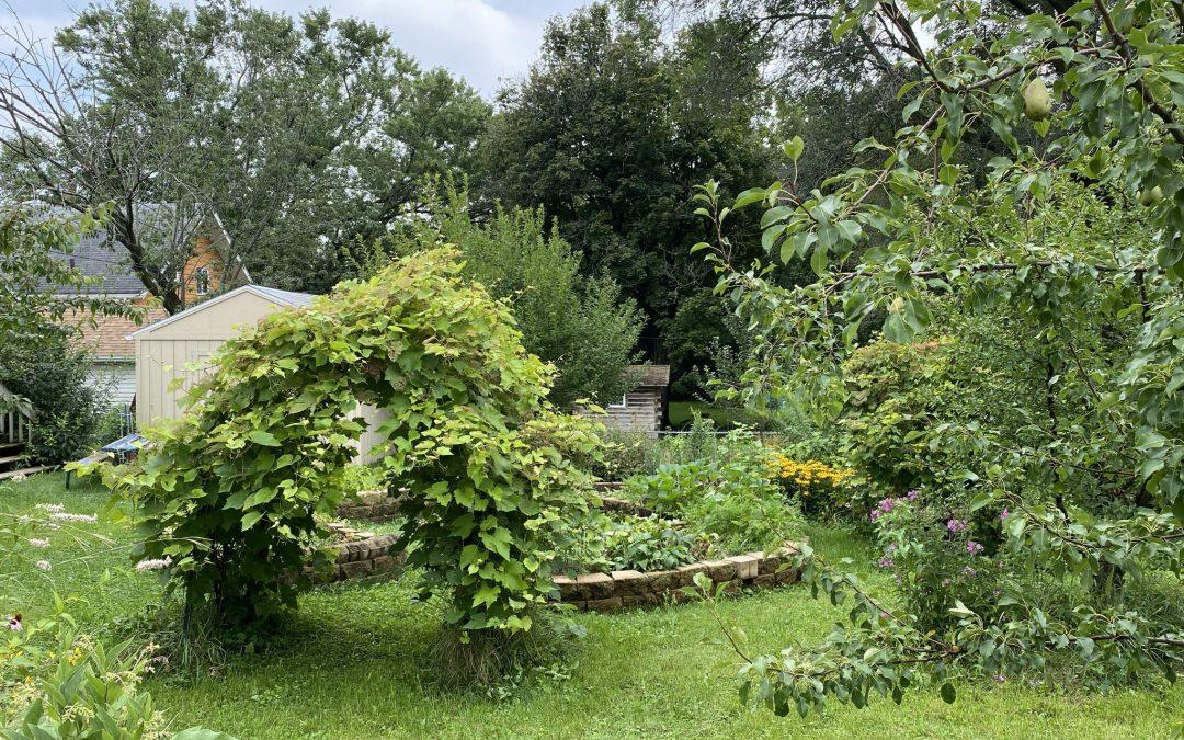 Native Plantings Garden Open House #5