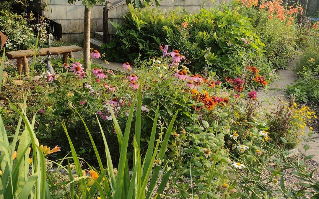 Colorful native plantings in a front yard